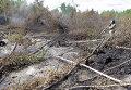 Тушение торфяных пожаров в Шатурском районе Подмосковья