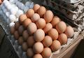 Торговля куриными яйцами