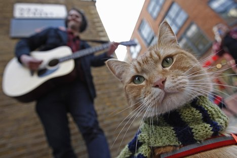 Картинка кота уличного