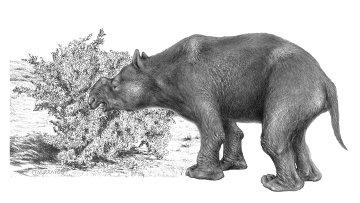 Сумчатые бегемоты-дипротодоны