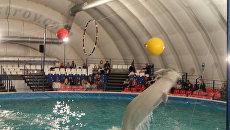 дельфинарий Москва ВВЦ дельфин