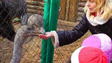 Сказочные герои учат детей дружить с животными в зоопарке Костромы