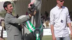 Самых красивых скакунов выбрали в Саудовской Аравии