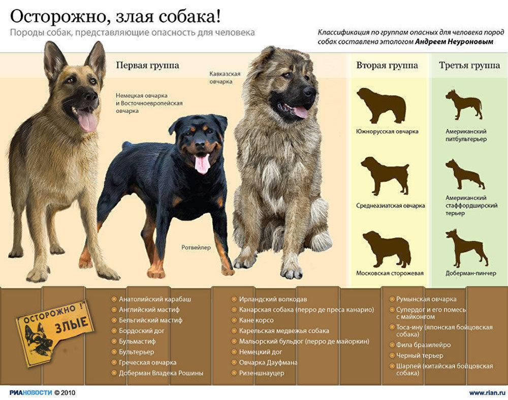 каждый железобетонный когда начали изучать породы собак предложения