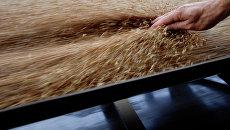 Скурихин: цены на зерно в РФ в 2011 г могут вырасти примерно на треть