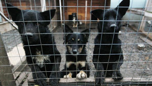 Собаки в приюте, архивное фото