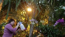 Работа оранжереи орхидей. Архивное фото