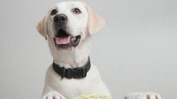 """Собаки были одомашнены человеком благодаря """"всеядности"""", которую собакам подарили крахмальные гены"""