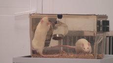 Тысячи крыс и мышей живут под Новосибирском в абсолютной чистоте
