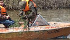 Еловые гнезда помогут рыбе размножаться возле Новосибирской ГЭС