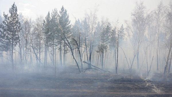 Лесной пожар, архивное фото