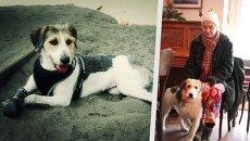 Собачье счастье, или Как московских дворняг отправляют на ПМЖ за границу