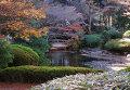 Токио - место проведения Олимпийских игр 2020-го года