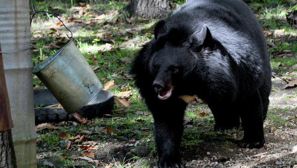 ВЯпонии всафари-парке медведь напал наженщину