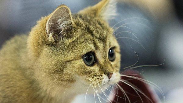 Кошка, архивное фото