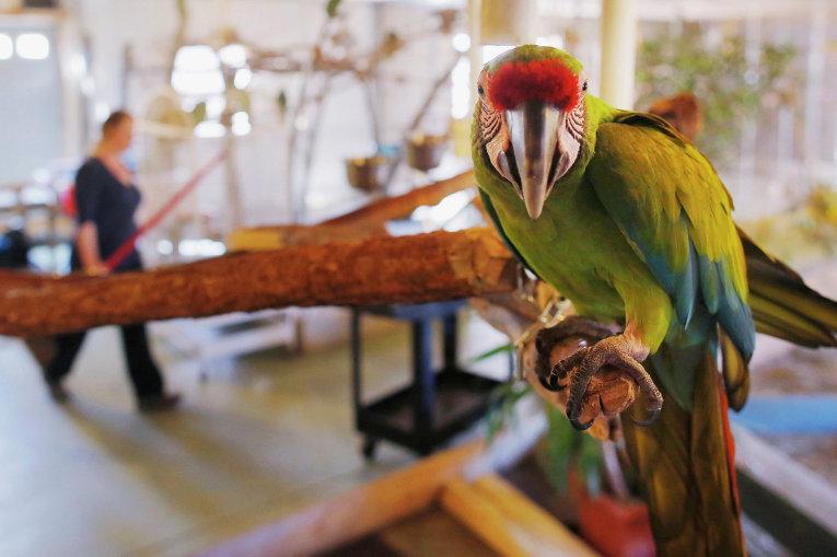 Большой зеленый ара