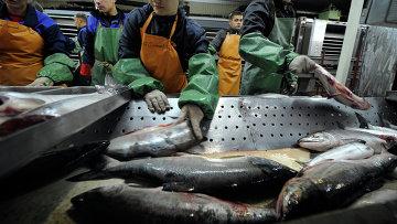 Переработка лосося. Архивное фото
