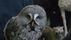 Томские зоологи показали, как кормят сову, попавшую накануне в ДТП