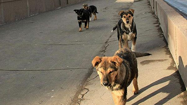 Проблема бездомных животных и пути ее решения. Справка