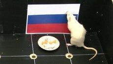 Только Россия: как крыса из Томска снова нагадала победу хоккеистам РФ