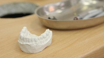 Зубная челюсть. Макет