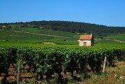 виноградники Бургундии во Франции