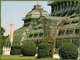 Пальмовый дом дворца Шёнбрунн