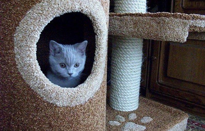 Как обустроить кошкин дом в квартире