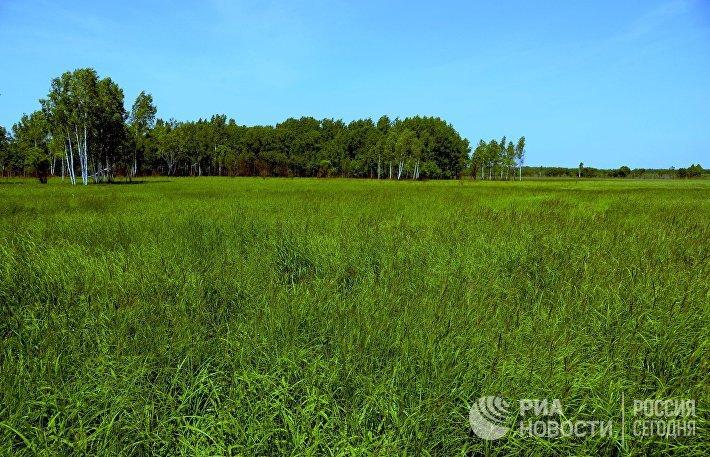 Участок земли, предоставленный в аренду как дальневосточный гектар