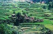 Рисовые террасы на Филиппинах